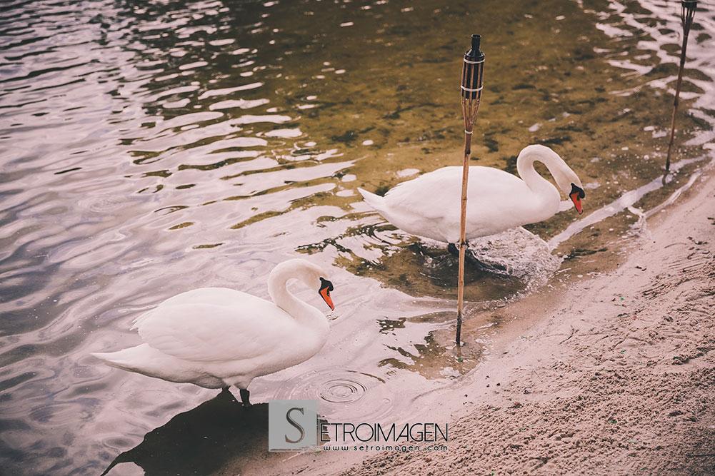 boda-prados-moros_setroimagen_davidycristina_080